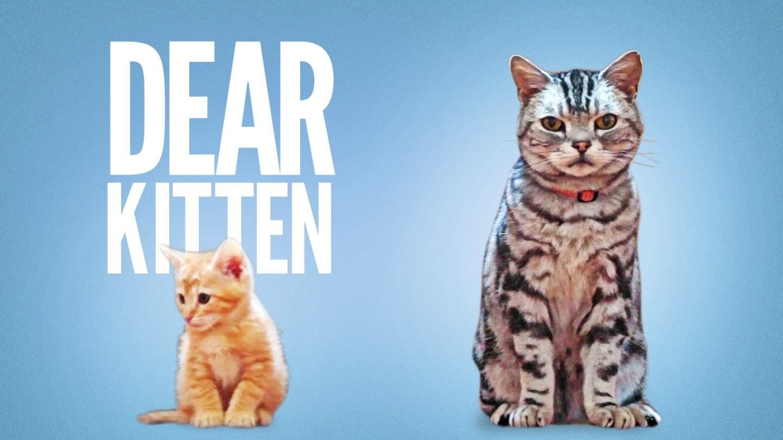Dear Kitten: conselhos de um gato para umfilhote