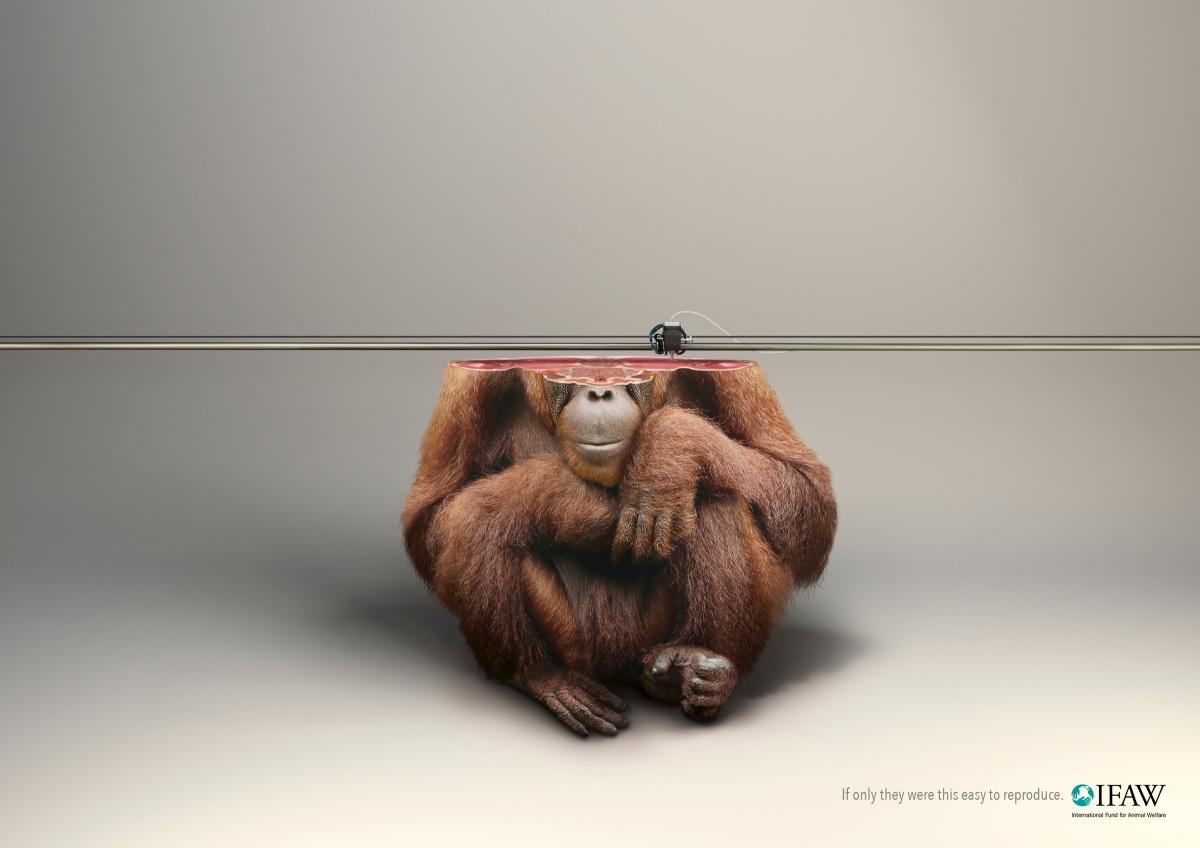 ifaw_3d_print_orang-utan_aotw