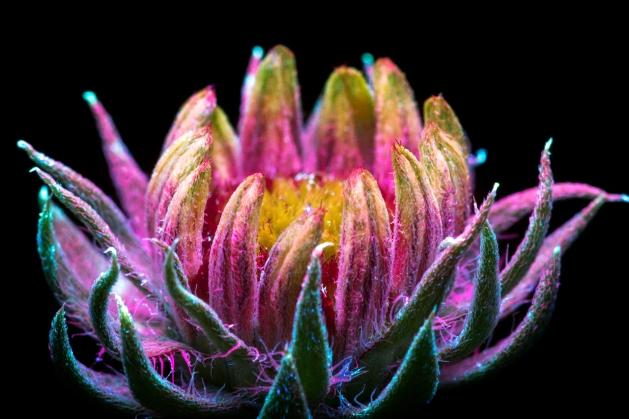 craig-burrows-uvivf-flower-2